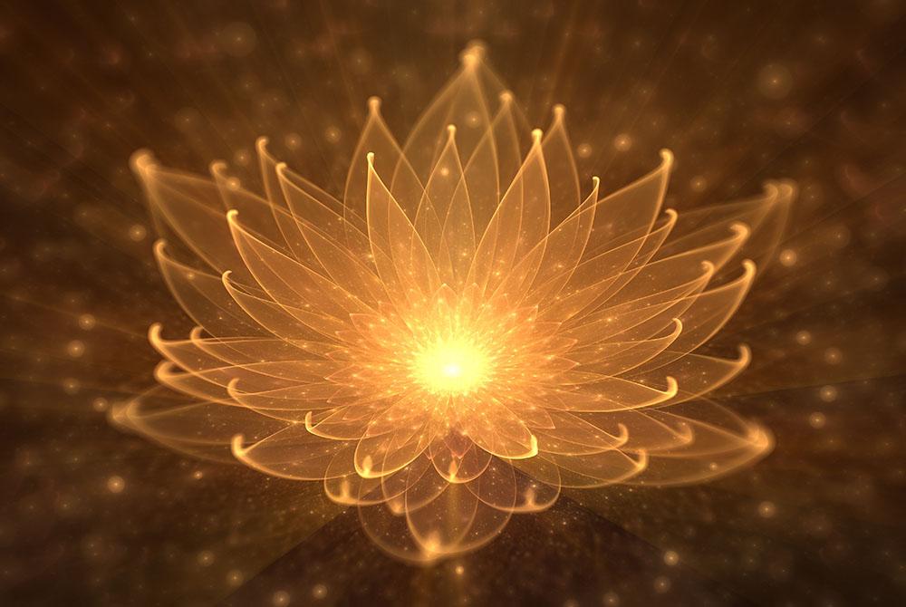 Leuchtende orange Lotusblume mit durchscheinenden Blütenblättern