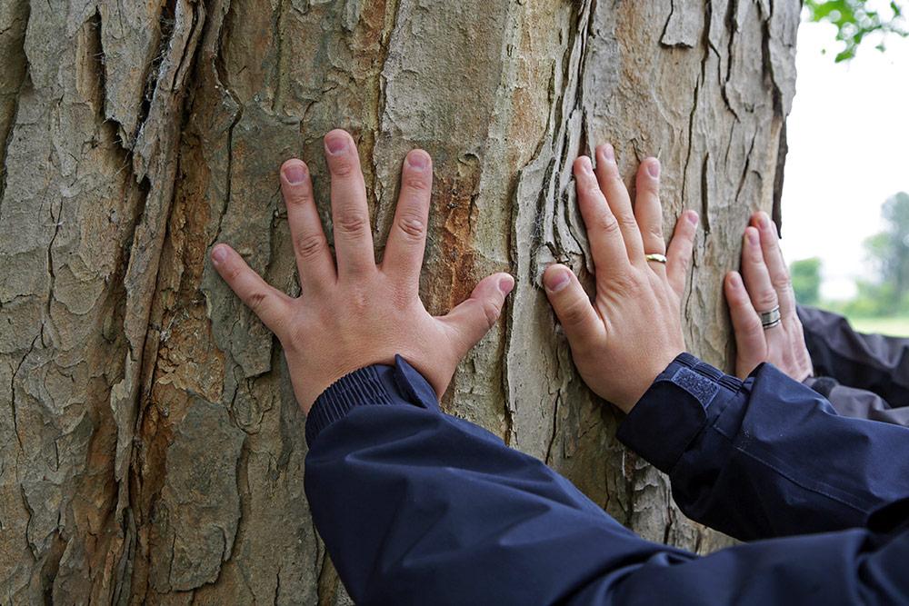 Hände an einem riesigen Baumstamm